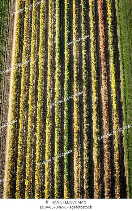 Viticulture, autumn, aerial shots, light mood, Ventien, Italy