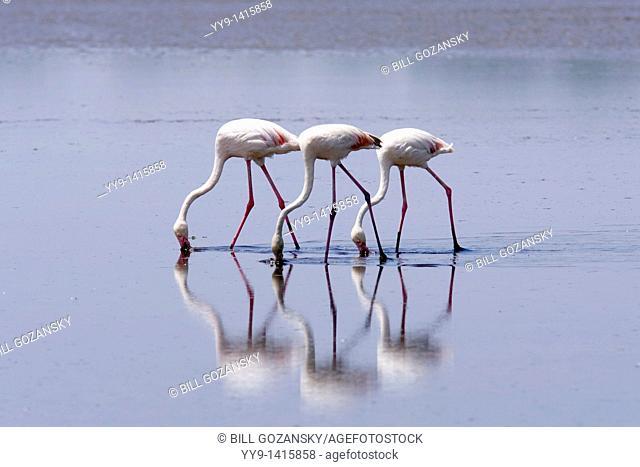 Flamingos - Lake Ndutu, Tanzania