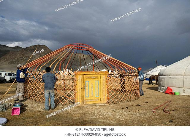 Kazakh nomads erecting ger camp, in preparation for Eagle Hunters Festival, Altai Mountains, Bayan-Ulgii, Western Mongolia, october