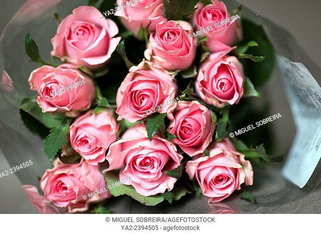 Bunch of Pink Roses in Cellophane