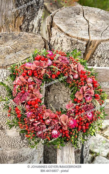 Autumn wreath tied to birch trunk with rosehip (Rosa canina), boxwood (Buxus), heather (Calluna vulgaris), Stonecrop (Sedum), hydrangea (Hydrangea)