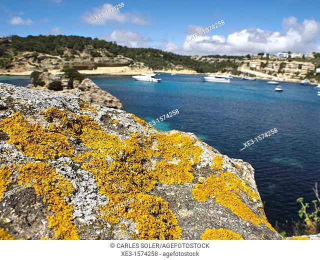 Yellow lichen on a rock, Majorca, Spain