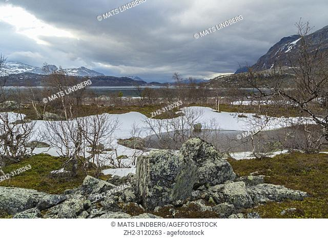 View over Stora sjöfallets national park in spring time, snow and ice on the water, birch trees budding and cloudy weather, Stora sjöfallets national park