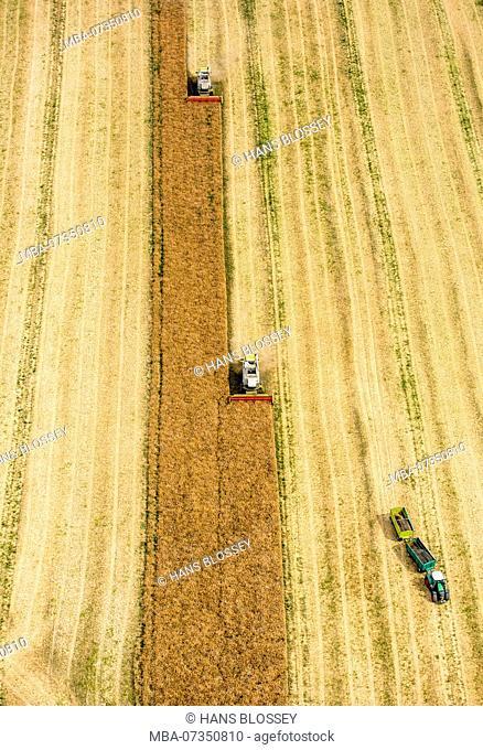 Grain harvest, Claas combine harvester during harvest, agriculture, Vipperow, Mecklenburg Lake District, Mecklenburg-Vorpommern, Germany