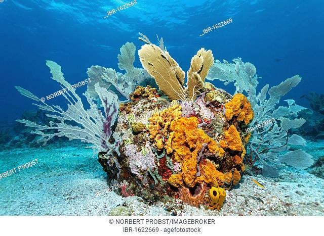 Reef formation, block, various colourful sponges, coral, sandy bottom, Little Tobago, Speyside, Trinidad and Tobago, Lesser Antilles, Caribbean Sea