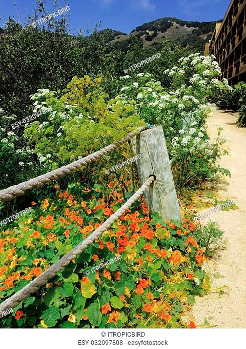Native plants are in full bloom along a sandy path near the beach in California