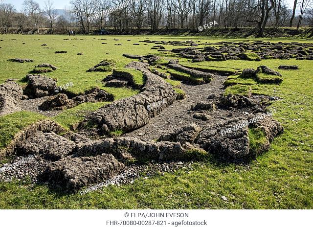 Sods of earth in grassland peeled back by flooding in field, Braithwaite, Lake District, Cumbria, England, March