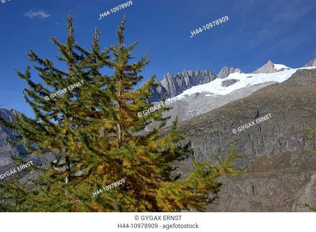Switzerland, Europe, Wallis, Alps, Riederalp, Landscape, Mountain, autumn, clouds, Aletschgletscher, glacier, larch, tree