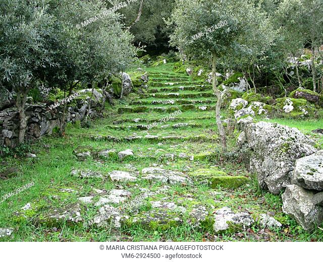 Stone stairs covered in moss in the woods in Giara di Gesturi, Sardinia, Italy