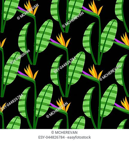 Strelitzia Seamless Pattern. Colorful bright flowers on black background. Vector background with tropical flowers for textile, print, clothing, wallpaper