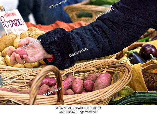 Shopping for organic produce at farmers' market, Nevada City, California