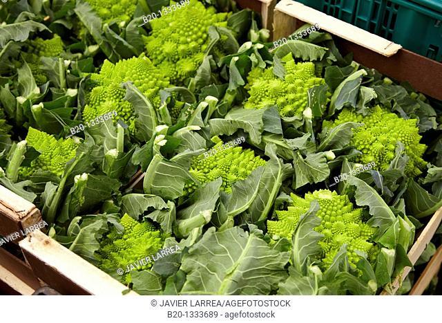 Romanesco broccoli, Mercabilbao fruits and vegetables wholesale market, Basauri, Bilbao, Bizkaia, Euskadi, Spain