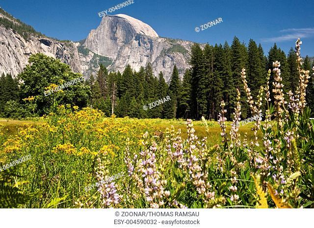Half Dome vom Yosemite Valley aus gesehen mit Wies