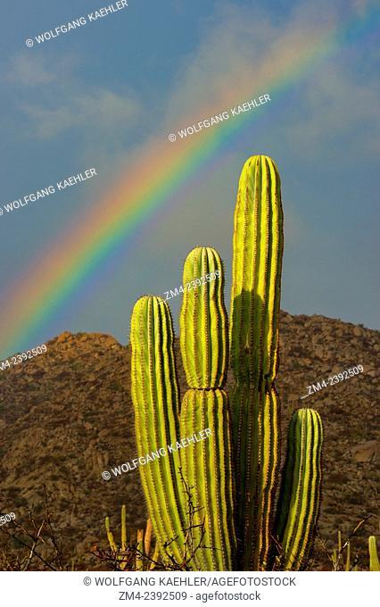 Landscape with cardon cacti (Pachycereus pringlei) and rainbow on Isla Espiritu Santo in Baja California, Mexico