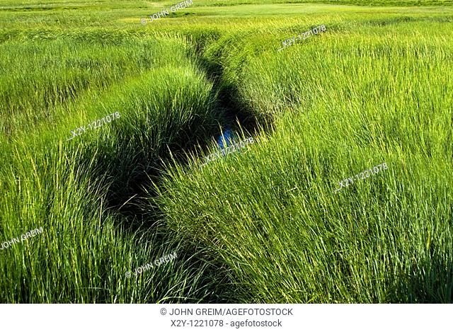 Waterway meandering through wetland sea grass