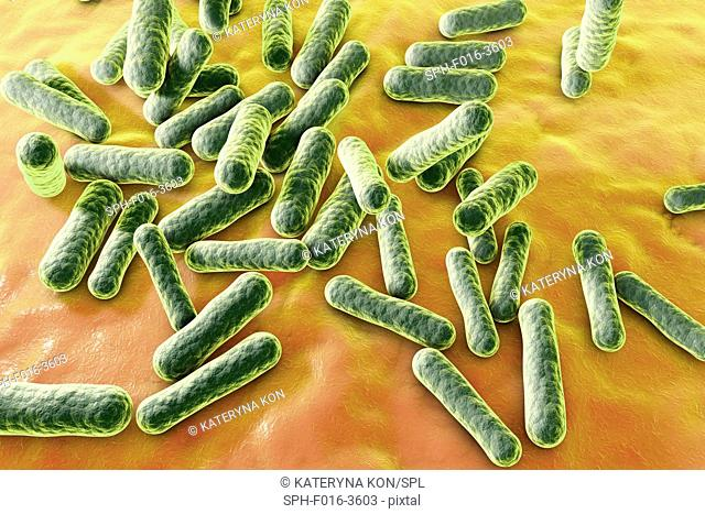 Propionibacterium bacteria, computer illustration. These are an example of non-pathogenic bacteria found on human skin, where they are well adapted to the...