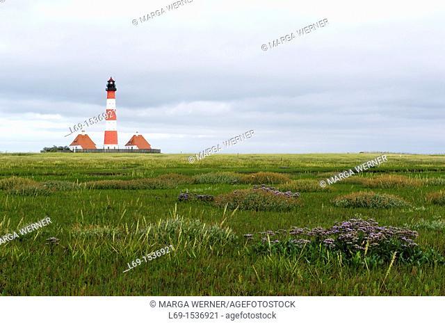 Lighthouse 'Westerhever Sand', and salt marsh with sea lavender, Limonium vulgare, and salt cordgrass Spartina townsendii, Peninsula 'Eiderstedt'