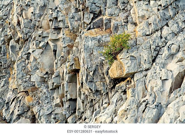 littoral rock, close up