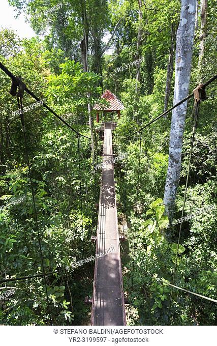Canopy walkway at Thung Khai peninsular botanic garden, Trang province, Thailand