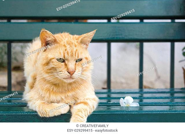 Tiger colored green eyes cat sitting on a green bench next to a flower