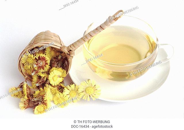 Tussilago farfara - Coltsfoot tea - medicinal tea -