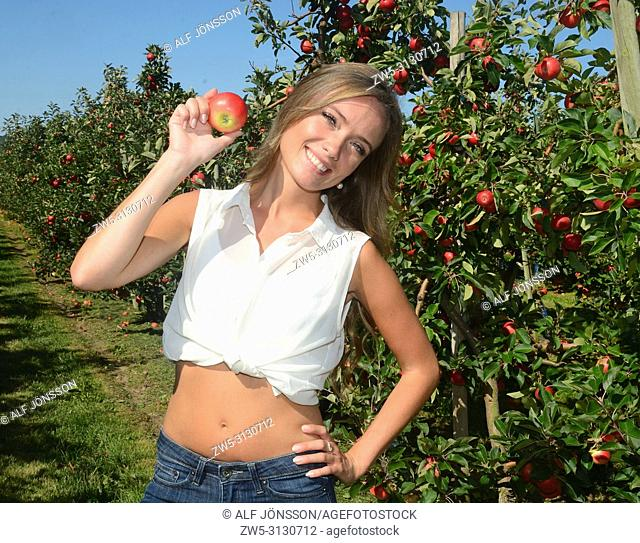Young smiling woman picking red apples in Österlen fruit district in Rörum, Scania, Sweden