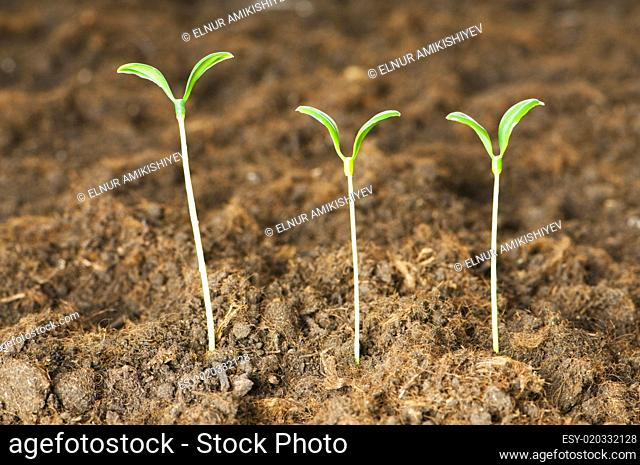 Seedlings illustrating the concept of new life