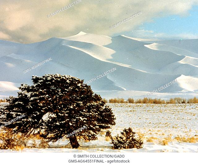 Snow covered dunes and evergreen tree at Great Sand Dunes National Park and Preserve, Colorado, 1967