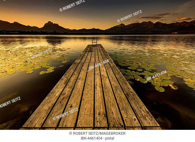 Dock at mountain lake with lily pads (Nymphaea), Allgäu Alps at back, sunrise, Hopfensee, Hopfen am See, Ostallgäu, Bavaria, Germany