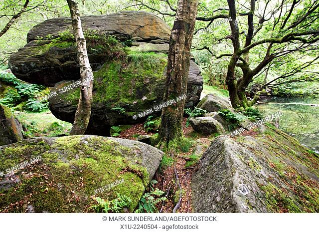 Boulder and Trees by Guisecliff Tarn Pateley Bridge North Yorkshire England