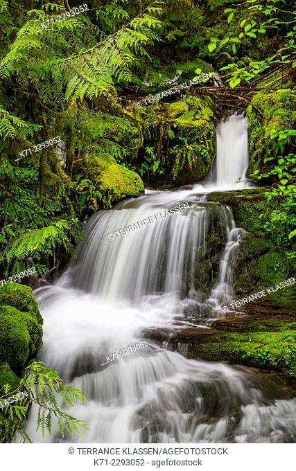 A small roadside waterfall along the Willamette Hwy in rural Oregon, USA