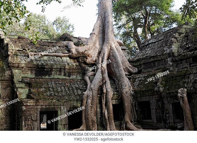 Ruins of the temple Ta Prohm at Angkor near the city Siem Reap in Cambodia. November 2010.  V10CAM0405RM