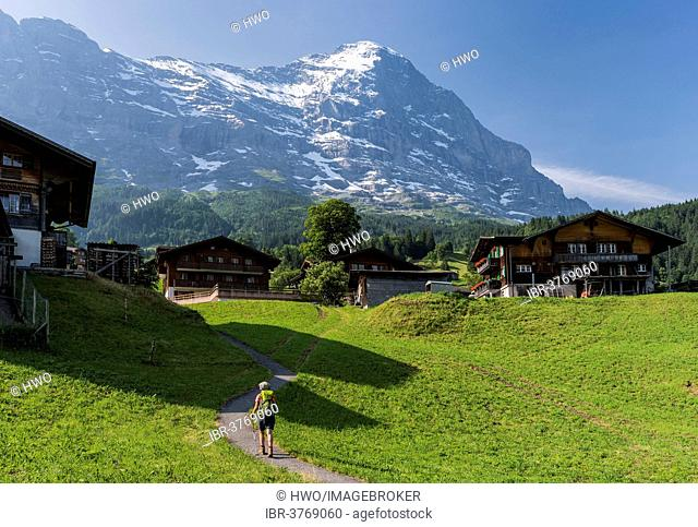 Traditional wooden houses, behind the Eiger North Face, Swiss Alps Jungfrau-Aletsch UNESCO World Heritage, Grindelwald, Canton of Bern, Switzerland