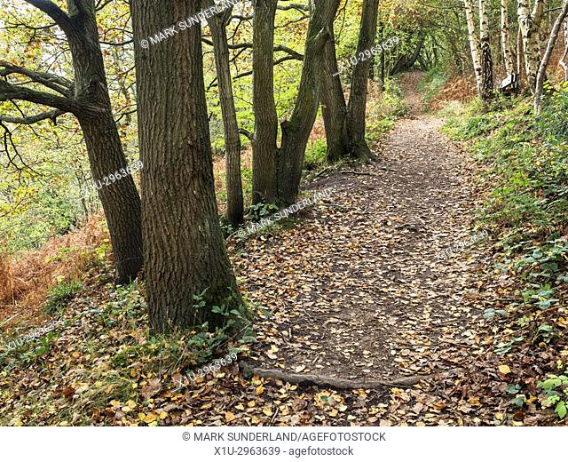 Path through Spring Wood in Nidd Gorge Woods in Autumn Knaresborough North Yorkshire England