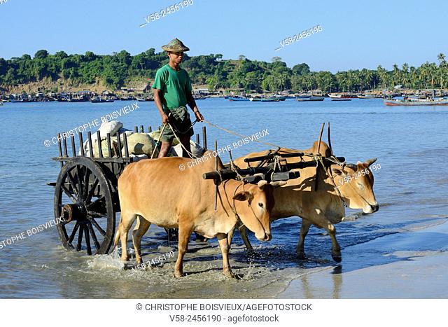 Myanmar, Rakhine State, Ngapali surroundings, Lon Tha beach, Ox cart carrying fresh fish