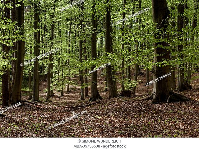 mountain forest in the spring