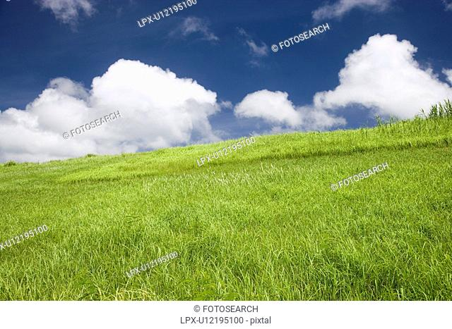 Grass field, Ishigaki Island, Okinawa Prefecture, Japan