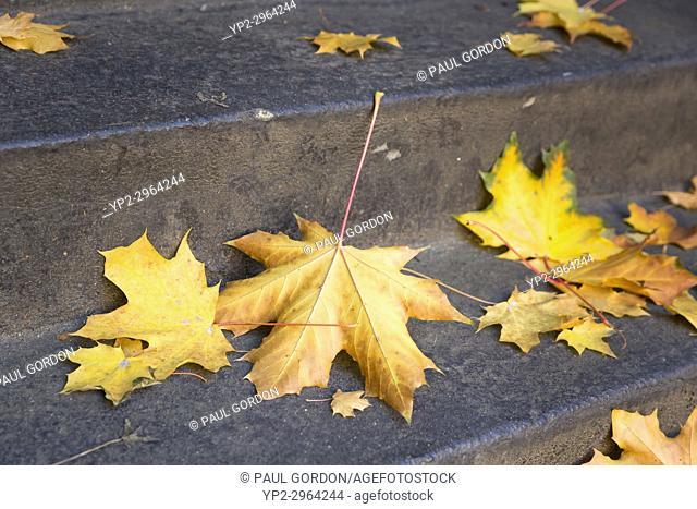 Seattle, Washington: Fallen maple leaves on a stairway in Volunteer Park