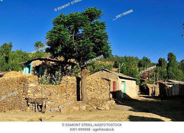 dusty lane in the oldtown of Aksum, Axum, UNESCO World Heritage Site, Tigray, Ethiopia, Africa