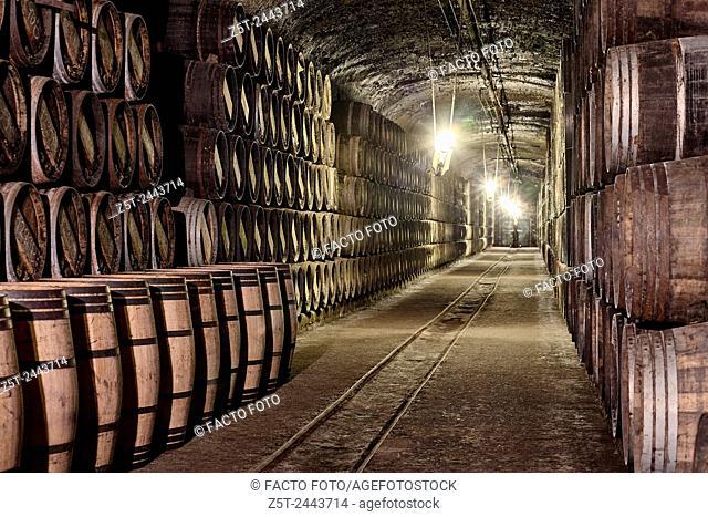 """""""""""""""""""""""El calado"""""""" cellar at R. Lopez de Heredia Viña Tondonia winery. Haro. La Rioja. Spain"""