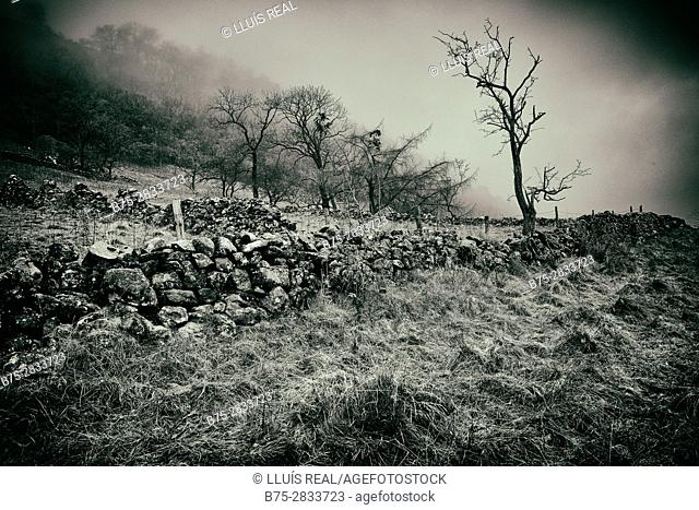 Early morning rural landscape with mists, trees and dry-stone walls. Buckden North Yorkshire, Yorkshire Dales, Skipton, England, UK