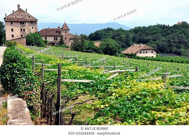 Südtiroler Weinstraße