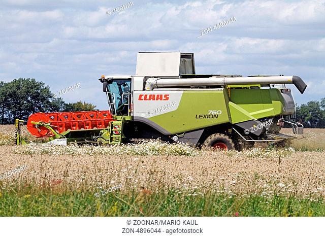 Ein Mähdrescher vom Typ CLAAS LEXION 760 während der Rapsernte in den Nachmittagsstunden auf einem Feld bei Axien in Sachsen - Anhalt