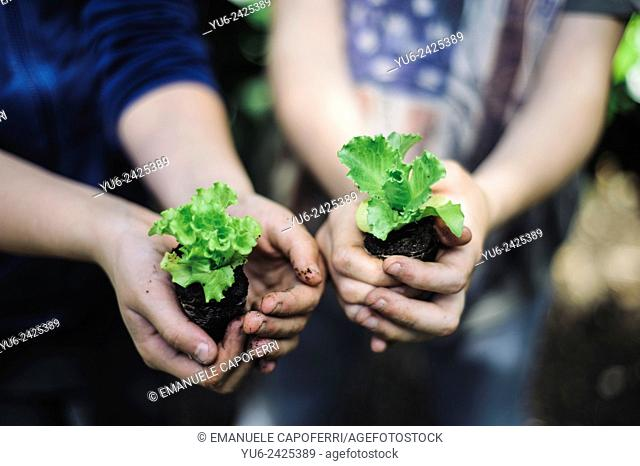 Closeup of hands of children with vegetable planting, preparation of the garden home