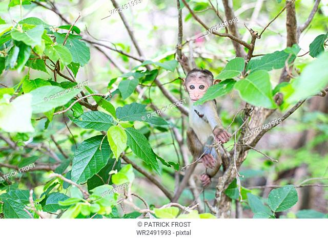 Baby monkey sitting in tree