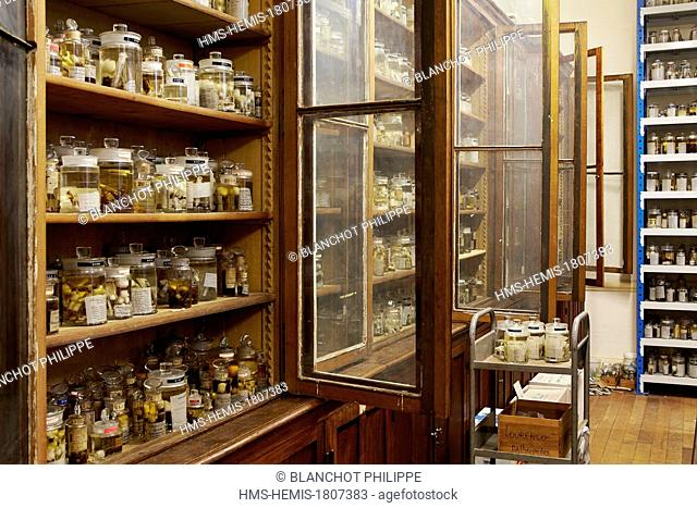 France, Paris, Museum National d'Histoire Naturelle, Arachnology Laboratory, Spiders collections conserved in alcohol