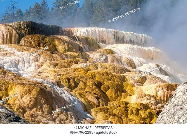 Mammoth Hot Springs terraces, Yellowstone National Park, UNESCO World Heritage Site, Wyoming, United States of America, North America