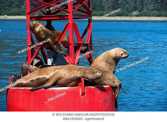 California sea lions (Zalophus californianus) on a navigation marker near Petersburg, Southeast Alaska, USA