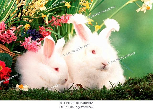 rabbit with young rabbit