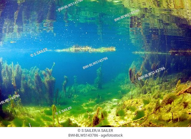 underwater landscape of a clear lake with underwater plants. As the shot was taken just below the water line, the landscape reflects itshelf in the surface of...